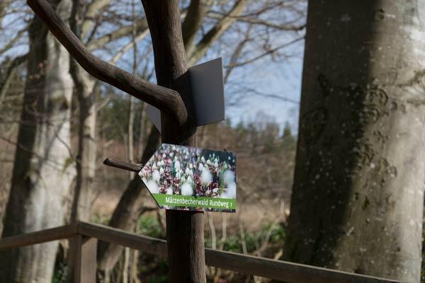 Märzenbecherwald Rundweg Ettenstatt