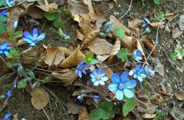 Frühjahrsblüher Altmühltal