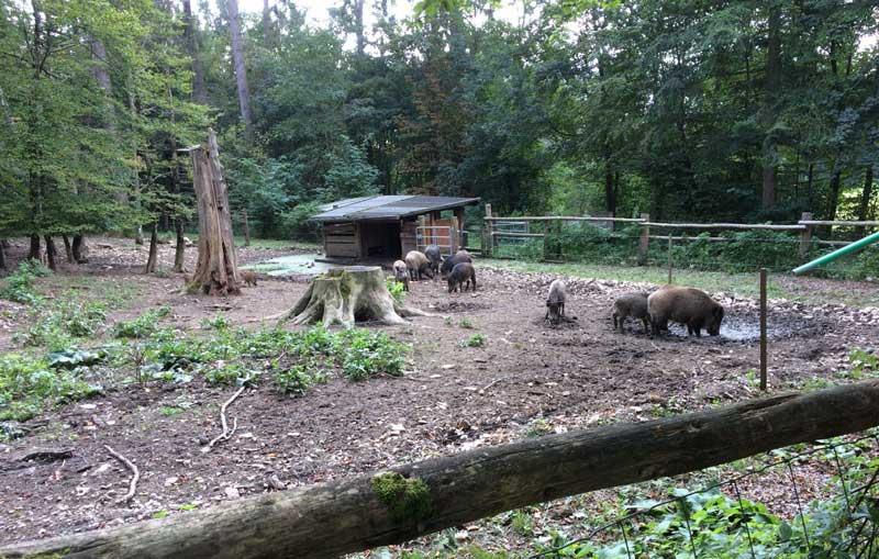 wildschweine-altmuehltal-gelaender