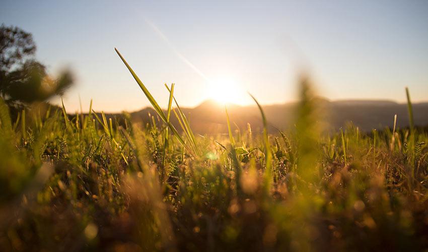 Gras-Sonnenuntergang-Sommer