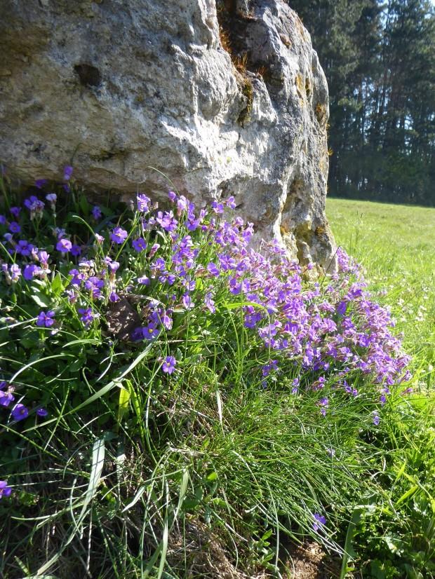 Naturlehrpfad-Obereichstaett-Blumen