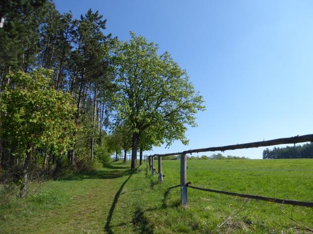 Naturlehrpfad-Obereichstaett-Koppel