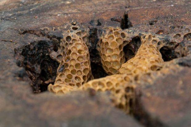 Honigwaben Bienen