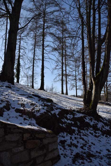 Winter Wald Bäume